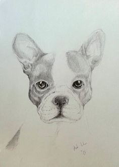 Drawing Pencil French Bulldog