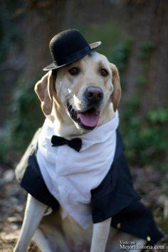 boda perros mejor historia (3)