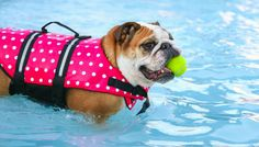 10 Swimming Safety Tips for Your Dog - Puppy Leaks