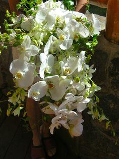 Orchid Cascade~ Stems Flower Shop Evergreen CO