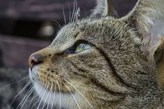 Cat by Adam Budziarek