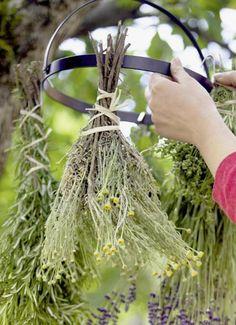 Kräutergarten: Kräutertrocknen
