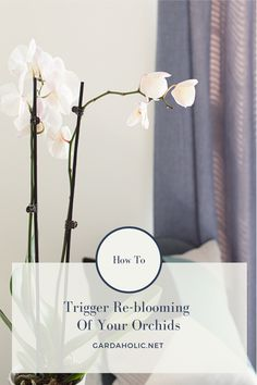 How To Trigger Reblooming Of Your Orchids - - Orchids (Phalaenopsis) are the revelation in terms of indoor plants. Most people imagine that the orchid is fragile plant, short-lived. But orchids resist months in a row! But after the blooming en…. Container Gardening Vegetables, Succulents In Containers, Container Flowers, Container Plants, Vegetable Gardening, Orchid Plant Care, Phalaenopsis Orchid Care, Orchid Plants, How To Grow Bananas