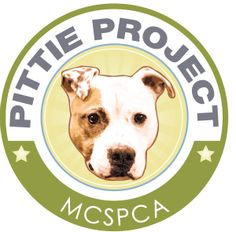 Pit Bulls in New Jersey, help them with the MCSPCA Pittie Project - Monmouth County SPCA