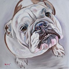 "bulldog 20x20"" oil on canvas by dragoslav milic"