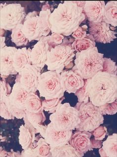 Indie vintage floral background flower background tumblr photo roses fleurs mightylinksfo