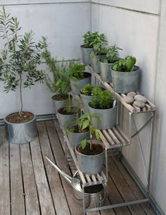 Look! Terraced Herb Garden