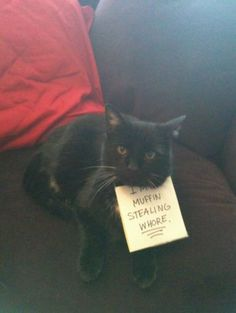 Cat shaming isnt as effective as dog shaming, because cats just dont give a fuck..  lol