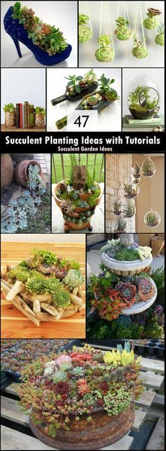 47 Succulent Planting Ideas with Tutorials and Inspiration Roundup. #succulentgardens #containergardens #drygardens #DIYplanters #lowmaintenance #DIYgifts #recycle #repurpose #gardengoodies