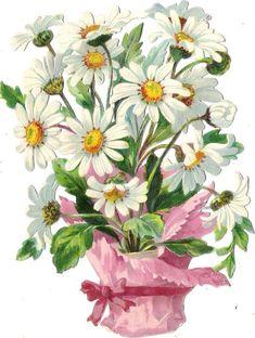 Oblaten Glanzbild scrap die cut chromo Margeriten 14,4 cm Blume flower margeride