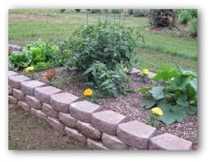 Planning your vegetable garden. Need plenty of sunshine, easy access to water and good soil.