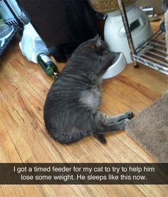 Kitties and diets don't do so well. (I'm dying this is so funny!!!!) lololololol