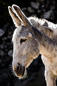 Grey mule