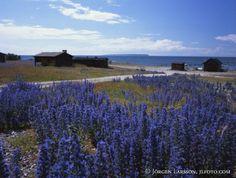 Blåeld Ekstakusten Gotland