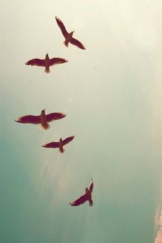 Find images and videos about sky, free and freedom on We Heart It - the app to get lost in what you love. Chiaroscuro, Back To Nature, Iphone Wallpaper, Iphone Backgrounds, Illustration, Art Photography, Creative Photography, Artsy, Tumblr