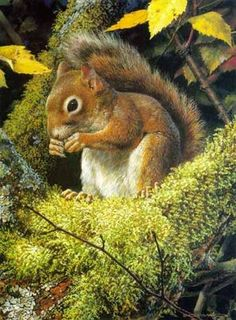 Carl Brenders - Acrobat's Meal - Red Squirrel