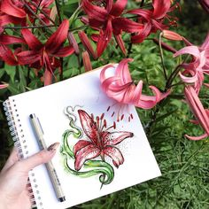 И последняя из серии лилии на природе)) #арт #lily #lilys #flower #flowers #nature #art #artwork #artist #penandink #illustration #sketch #ink #idraw #draw #paint #tattoo #wowtattoo #рисунок #лилии #лилия #цветы #цветок #ярисую #иллюстрация #акварель