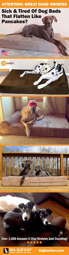 Dogs house ideas great dane 43 ideas for 2019 Great Dane Bed, Great Dane Dogs, I Love Dogs, Puppy Love, Cute Dogs, Big Dogs, Dogs And Puppies, Funny Animals, Cute Animals