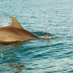 Explore Wild Dolphins in the Arabian Sea with a fun-filled boat tour. Also Watch popular place like Millionaire's Palace, Aguada Fort, Lighthouse & Jail from the boat. Spot Books, Arabian Sea, Lovely Creatures, Island Tour, Travel Companies, Short Trip, Boat Tours, Tour Operator, Deep Sea