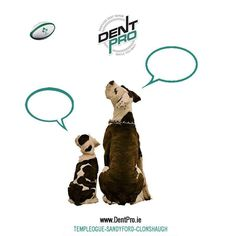 We thought it would be fun to think about the conversation would be between our father and son #rugby #sixnations2016 #sixnationsrugby #DentProIE #DentRemoval #lovedublin #Dublin #dogs #americanbulldogs