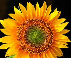 Sunflower light by AC Photo on 500px