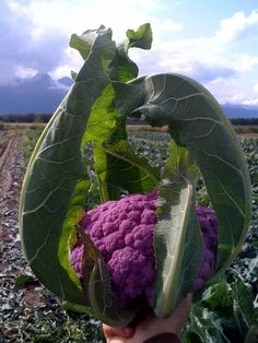 Alaska Food Policy Council: How do you want to improve Alaskas food system?