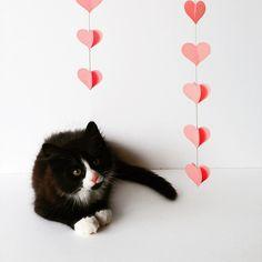 Pilu , My cat in Wonderland, Tuxedo cat , London Cat , Longhair , pink nose , pet , animal , cat blog , kitten