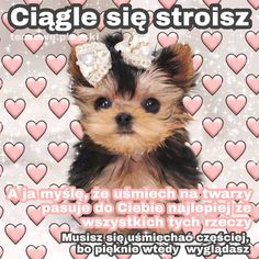 Cute Sentences, Heart Meme, Weekend Humor, Sweet Texts, Cute Memes, Wholesome Memes, Reaction Pictures, Anime Meme, Dog Love