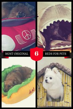 A special selection of the most exciting and affor… Presents For Dog Lovers, Gifts For Dog Owners, Dog Lover Gifts, Cute Dog Beds, Puppy Beds, Cute Dogs, Dog Boredom, Dog Bedroom, Puppy Drawing