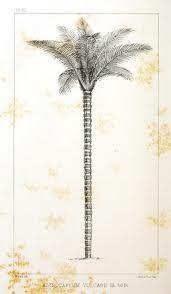 BOTANICAL PRINT PALM TREE - Google Search