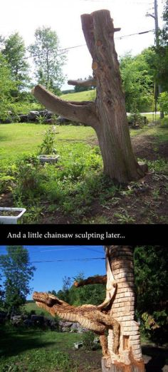 What to do with an old tree