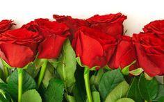 Fondo de pantalla primaveral rosas rojas