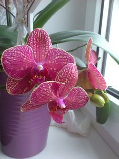 In voller Blüte Plants, Orchids, Plant, Planting, Planets