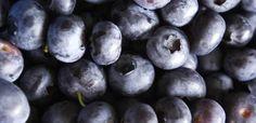Blåbær (620×300)