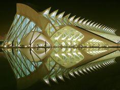 Valencia Science Museum - Nighttime. Santiago Calatrava