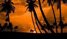 Sunset @Sarvi Solutions | Best SEO in Mumbai