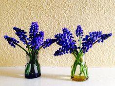 Blauwe druifjes in Holmegaard vaasjes