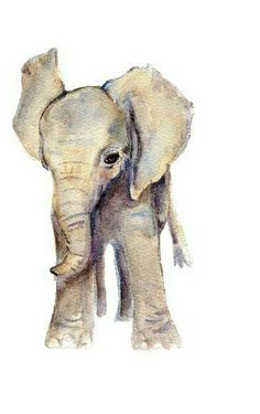 Watercolor elephant from a nursery print set by Mary's Flower Garden