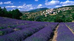 Rows of lavender and village of Aurel in Vaucluse region, just made it onto the wish list.