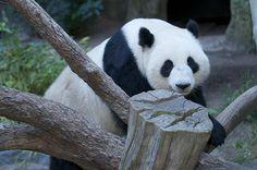 Happy 8th Birthday Su Lin | Su Lin celebrates her 8th Birthd… | Flickr