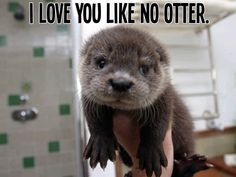I love you like no otter.