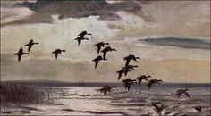 Hunting Art, Duck Hunting, Waterfowl Hunting, Wildlife Conservation, Bird Art, Watercolours, Natural History, Ecology, Galleries