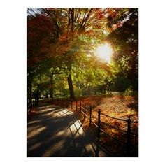 Autumn Sun in Central Park, NYC, Medium Poster A gorgeous autumn landscape featuring colorful leaves on trees and on the ground in Central Park, New York City.