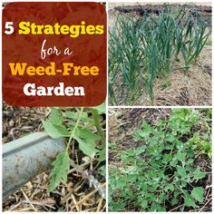 5 Strategies for a Weed-Free Garden | Homestead Honey