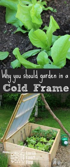 There are many benefits to gardening in a cold fra�