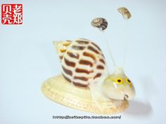 Shell animal shell crafts little turtle shell series snail shell small animal  Vintage sea $8.93