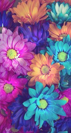 Imagen de flowers, wallpaper, and colors