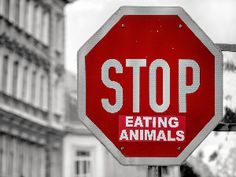 Stop Eating Animals - save the planet and yourself Feeling Sick, How Are You Feeling, Vegan Market, Vegan Challenge, Animal Agriculture, Cooking For Beginners, Get Educated, Vegan Animals, Make Good Choices