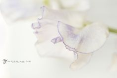 Serenity in Sweet Peas  |  northern California photographer