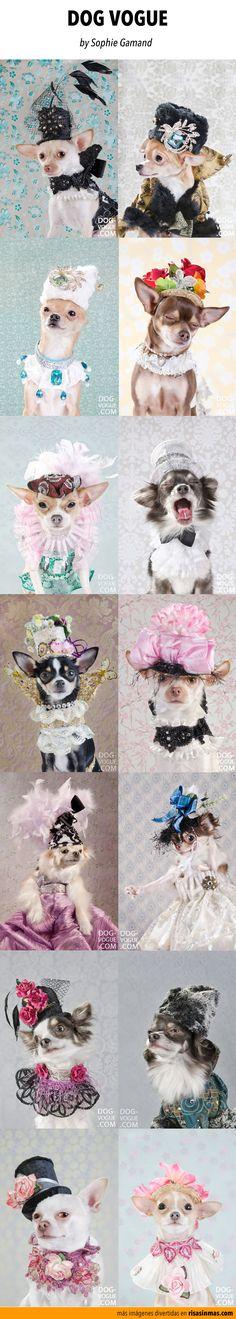 Dog Vogue. Fotografías por Sophie Gamand.